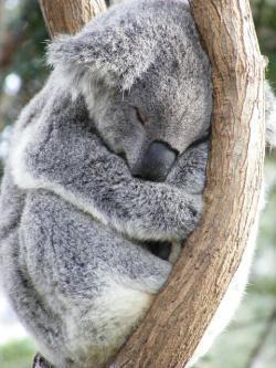 Eucalyptus Perfume Oil