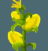 Healthy Farmer's Market Corn Confetti-